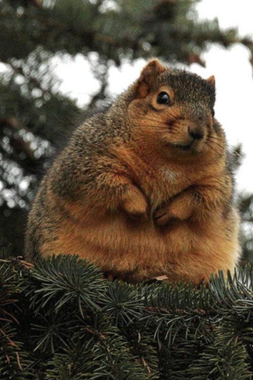 太った動物たち