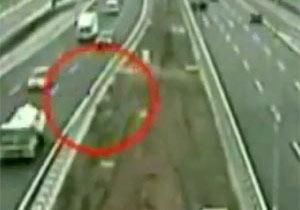 交通事故にあった犬を別の犬が救出