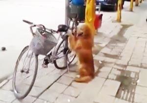 自転車をガードする犬