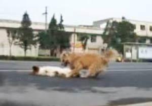 事故にあった子犬に寄り添うもう一匹の犬