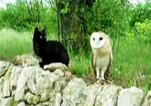 黒猫とフクロウのクールな友情