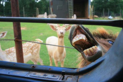 うっかり写ってしまったかわいい動物たち