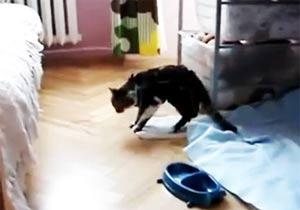 眠すぎる猫のジャンプ失敗