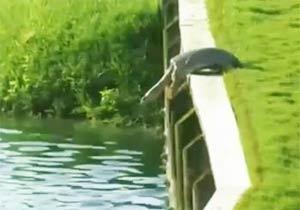 亀が飛び込もうとしている