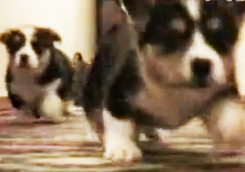 ワラワラ駆け寄ってくる子犬たち
