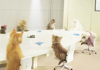 猫だらけの世界
