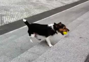 ボール拾いを繰り返す犬