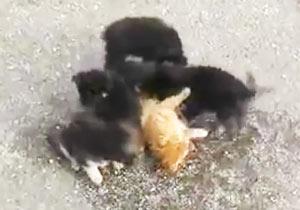 子犬に襲われる猫