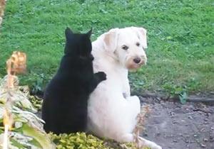猫が犬にマッサージ