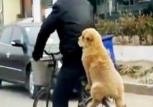 自転車の荷台に乗る犬