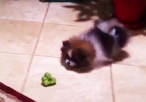 ブロッコリー嫌いな犬