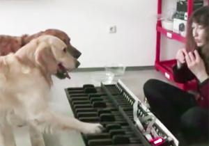 ちゃんとピアノを弾く犬