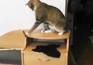 ペンを排除する猫