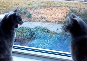 世間話をする猫2匹