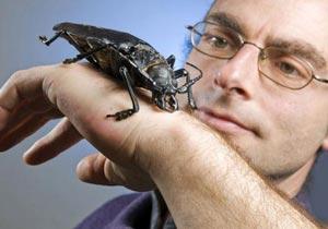 手のひらサイズの昆虫