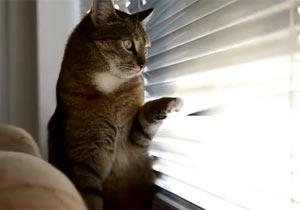 ブラインドをペコペコする猫
