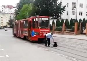 路面電車の行く手を阻む犬