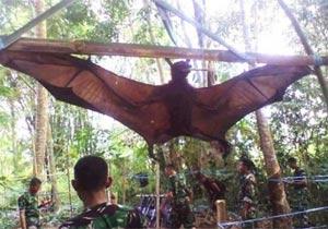 ペルーで発見された巨大コウモリ