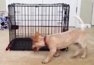自分のリードを追っかける犬