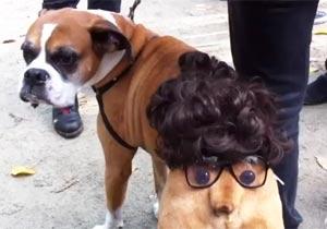 「鼻」の動きが気になる仮装犬