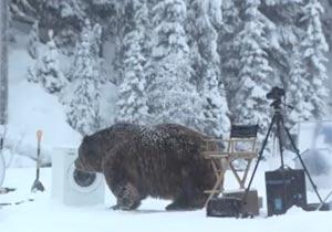 CM撮影中に現れたクマ
