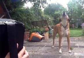 アコーディオンに共鳴する犬