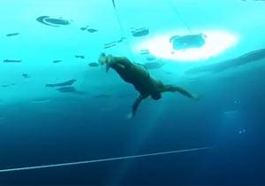 氷の下を潜水して世界記録達成