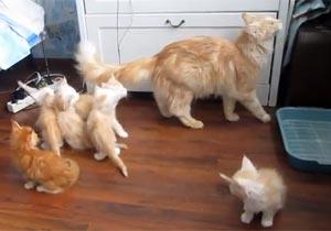 ジャンプしようとする猫、見守る子猫