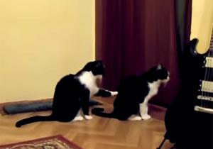 許しを乞う猫