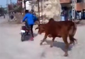 バイクを回転させると牛が接近
