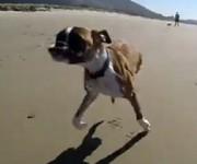 二本の前足だけで駆け回る犬