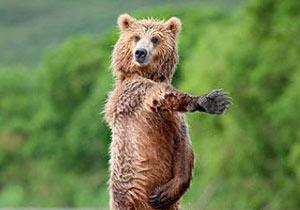 人間っぽい仕草をするクマさん