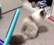 カチカチ音にビビりまくる猫