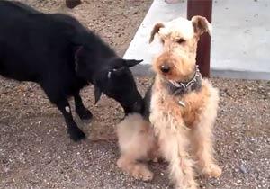羊に対して完全に無視する犬