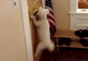 郵便物を一瞬で撃破する犬