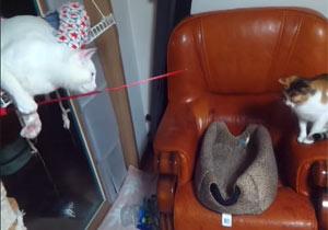 猫を釣ろうとしている猫