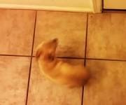 スピンして喜ぶ犬