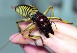 血が出てますけど…。強靭な顎を持つ昆虫「ウェタ」を手のひらに這わせた映像がヤバい(閲覧注意)
