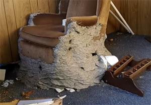 ソファーを飲み込むスズメバチの巣