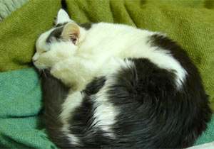 アコーディオンの合いの手を入れる猫