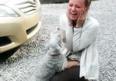 犬と飼い主が感動の再会