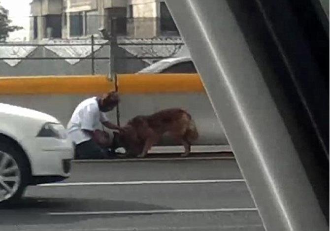 高速道路でケガをした犬を救助した女性