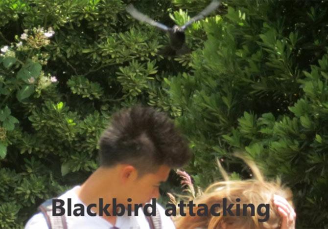 黒い鳥が人々を攻撃