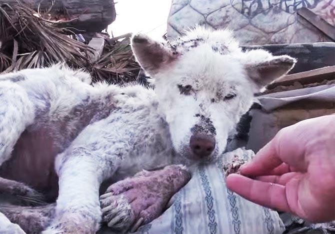 保護された犬のビフォーアフラー