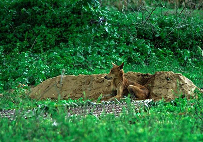 墓で亡くなった飼い主を待つ犬
