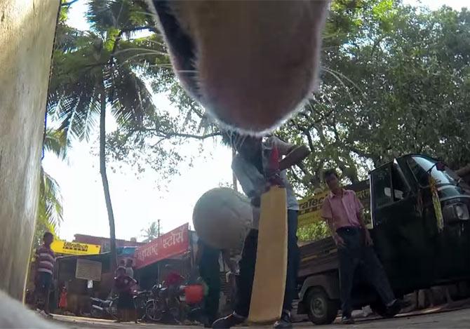 犬目線で撮影された痛ましい動画