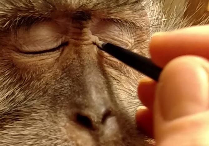 猿のお化粧動画