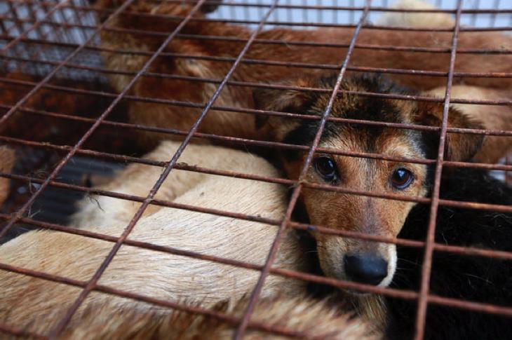 玉林の犬肉市場が禁止に