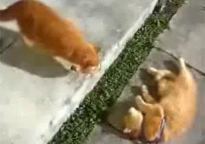 猫を「強制的に」散歩