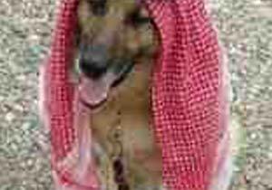 サウジアラビア人を激怒させた一枚の写真